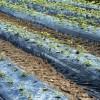 46 jóvenes agricultores jumillanos recibirán ayudas para invertir