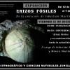"""Hoy se inaugura la exposición """"Erizos fósiles"""" en el Museo Etnográfico"""