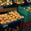 La Guardia Civil detiene a cuatro personas por la sustracción de fruta y herramientas en fincas agrícolas