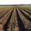 La nueva orden de ayudas para agricultura ecológica aumenta hasta alcanzar los 53,4 millones