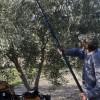 La Comisión Europea presenta ayudas a los agricultores por 500 M€