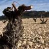 Tres de los mejores vinos del mundo se elaboran en Jumilla