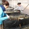 La UPCT crea humedales artificiales para sanear el Mar Menor