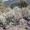 Aprobado el Plan de Aprovechamiento de Plantas Aromáticas en los montes públicos