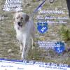 La 8ª Marcha Solidaria subirá al Castillo con los perros abandonados del Albergue Municipal