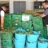 Un vecino de Jumilla entre los cinco detenidos en una operación de la Guardia Civil donde se han incautado de 9.000 plantas de marihuana