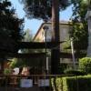 Jardines inicia trabajos de conservación de un pino centenario de la Plaza del Rey Don Pedro