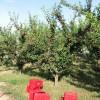 La innovación, clave del éxito de los frutales murcianos