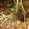 Más de 3.000 hectáreas afectadas tras el granizo de este miércoles.