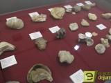 """""""Gasterópodos, fósiles y actuales"""" una exposición y conferencia de Sebastián Martínez"""