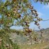 La Mesa Nacional de Frutos secos reclama el mantenimiento y mejora de la ayuda nacional
