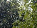 """Las lluvias, """"una bendición"""", para el campo murciano"""