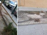 IU-Verdes denuncia mediante un escrito los posible incumplimientos en la gestión de la limpieza de las zonas ajardinadas de Jumilla