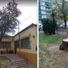 IU-Verdes lamenta la tala de otro árbol de gran envergadura de la zona del Mercado de Abastos