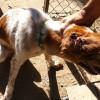 El SEPRONA de la Guardia Civil detiene o investiga en España a cerca de 600 personas por delitos contra el maltrato animal