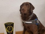 La Unidad Canina de Prevención, Seguridad y Rescate de la Policía Local de Jumilla ha interceptado a un individuo en posesión de 300 gramos de hachís