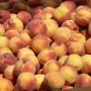 Los inspectores de la 'AICA' ya vigilan en la Región la campaña de fruta de hueso y UPA espera que su actuación contribuya a preservar los derechos de los agricultores