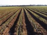Agricultura recibe 856 solicitudes de ayudas para la modernización de explotaciones agrarias y ganaderas con 131 procedentes de Jumilla