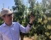 """Seve González: """"El Consejero de Agricultura se compromete a establecer con el IMIDA una línea de investigación para mejorar el cuajado de las pepitas de la Pera Ercolini de Jumilla y mejorar con ello su calibre, rendimiento y calidad"""""""