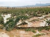 La Oficina Comarcal Agraria y el Ayuntamiento ponen a disposición de quienes lo necesiten formularios para declarar daños por las lluvias