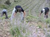 Abierto el plazo para solicitar aprovechamiento de pastos, esparto y plantas aromáticas