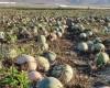 Entre 12 y 40 años se podría acabar el agua en el Altiplano según la Plataforma Salvemos el Arabí y Comarca