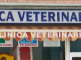 Encuentra en clínica veteriania  Centrofauna  todo lo que necesitas paras tus mascotas-