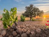 El pleno del Consejo Regulador de la  DOP Jumilla acuerda la reducción y eliminación  de cuotas a viticultores