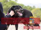 Entra en vigor la nueva ordenanza municipal sobre tenencia y protección de animales de compañía