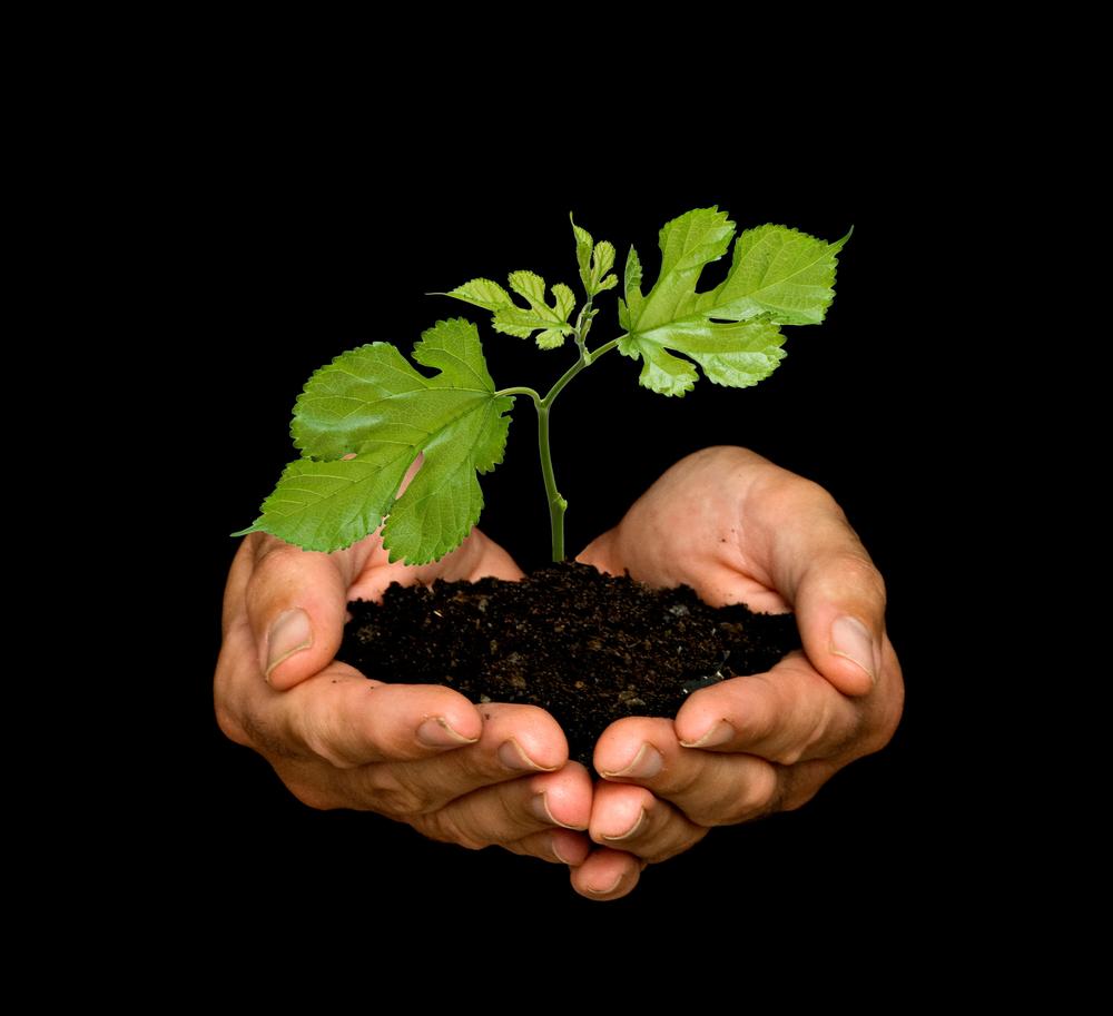 Resultado de imagen de plantamos árboles
