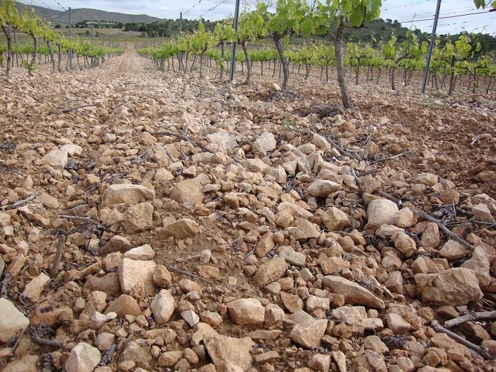 Los suelos en Casa Castillo y sus vinos de terruño   El Eco de Jumilla