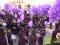 Los niños pintaron de morado las calles de Jumilla al son de cientos de tambores