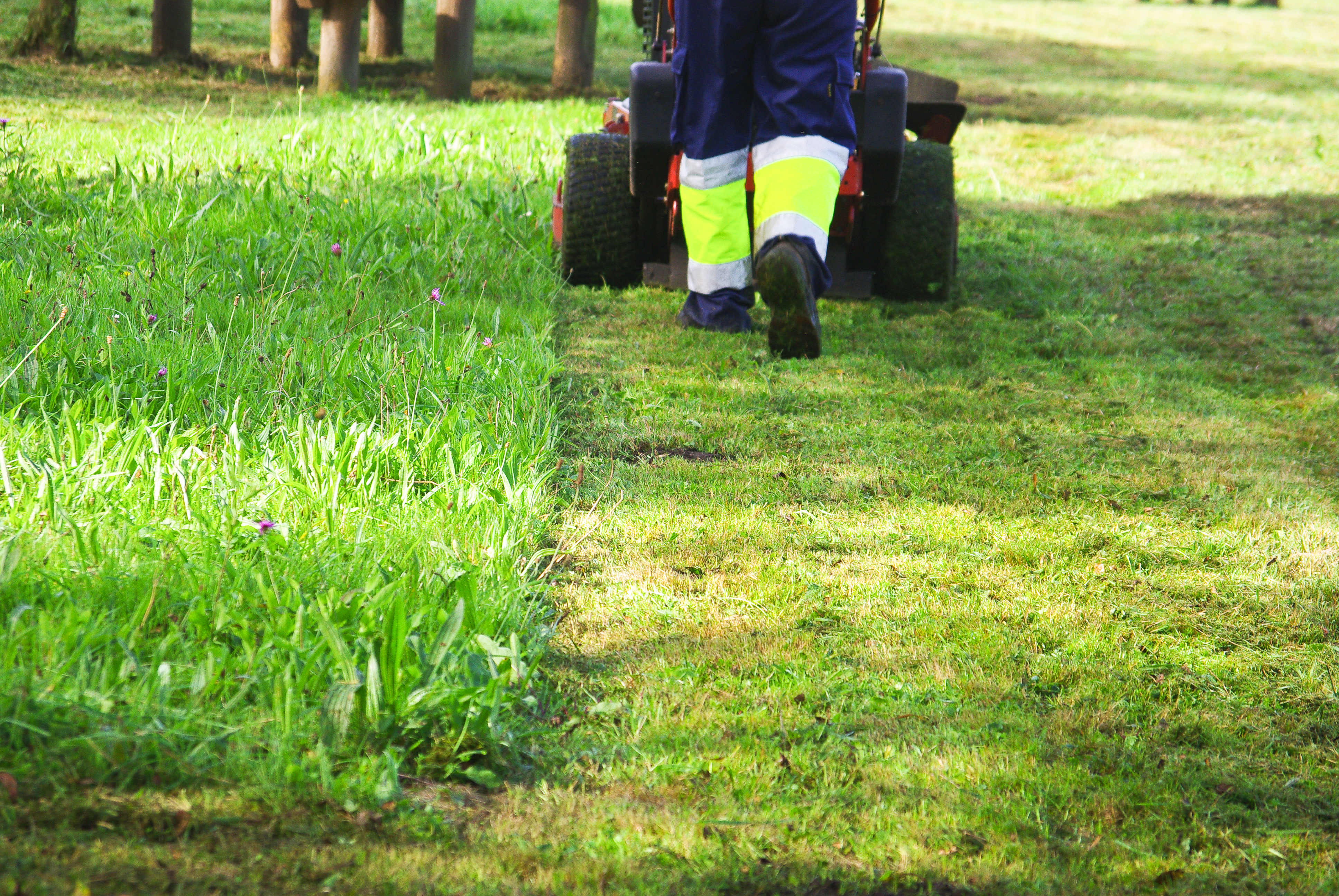 El ayuntamiento solicitar un proyecto de formaci n y - Jardines con poco mantenimiento ...