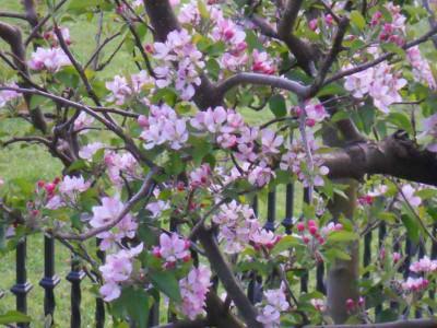 Flores_mayo_14-e1456244050564